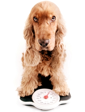 National Canine Weight Check – Is Your Dog Overweight?